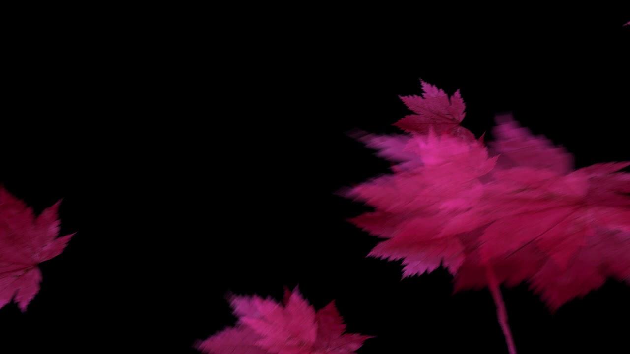 drops_leaf_12 落葉
