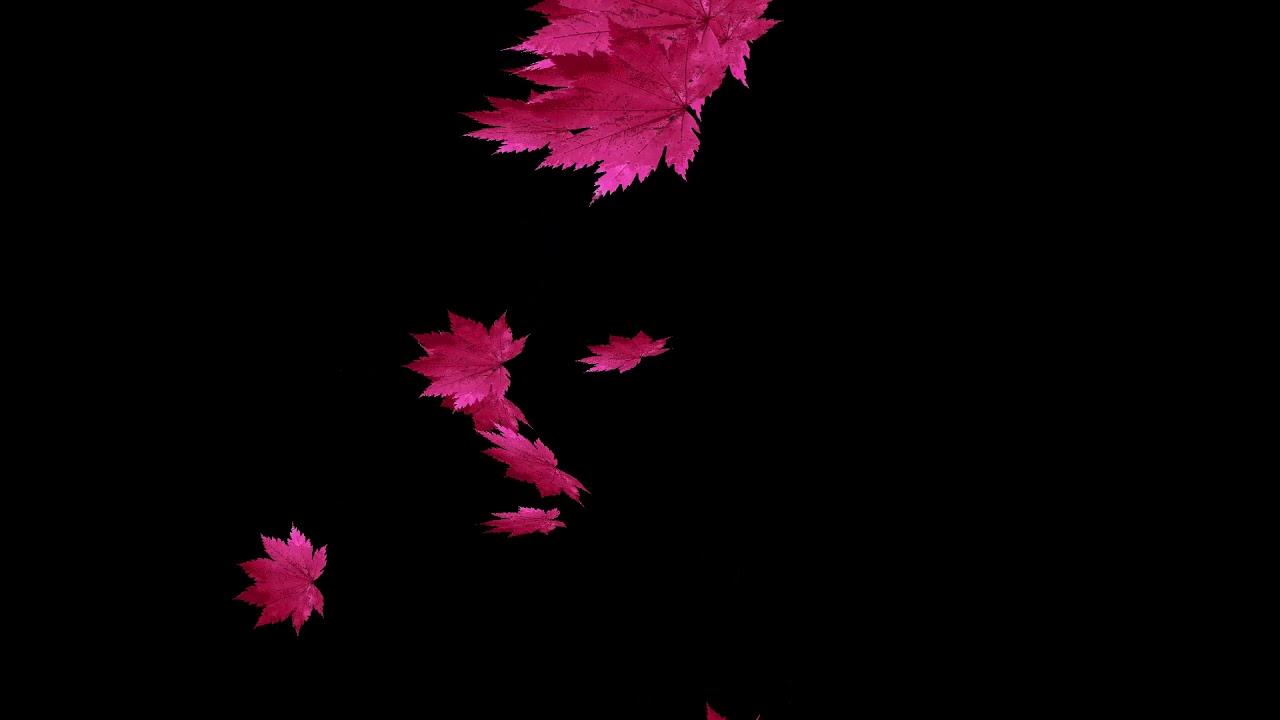 drops_leaf_13 落葉