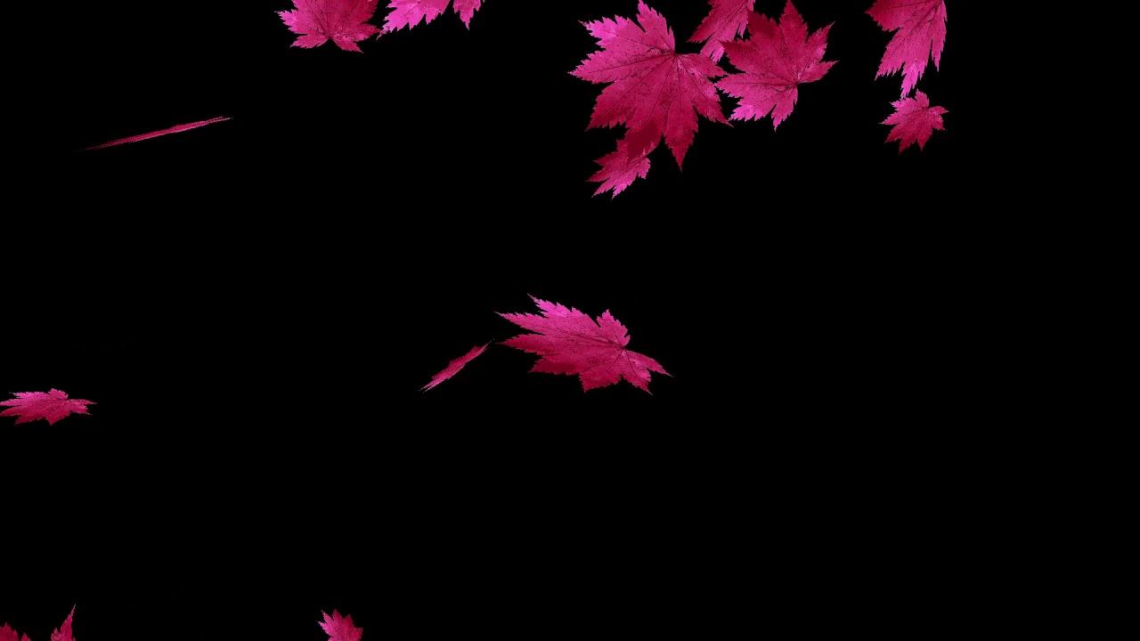 drops_leaf_14 落葉