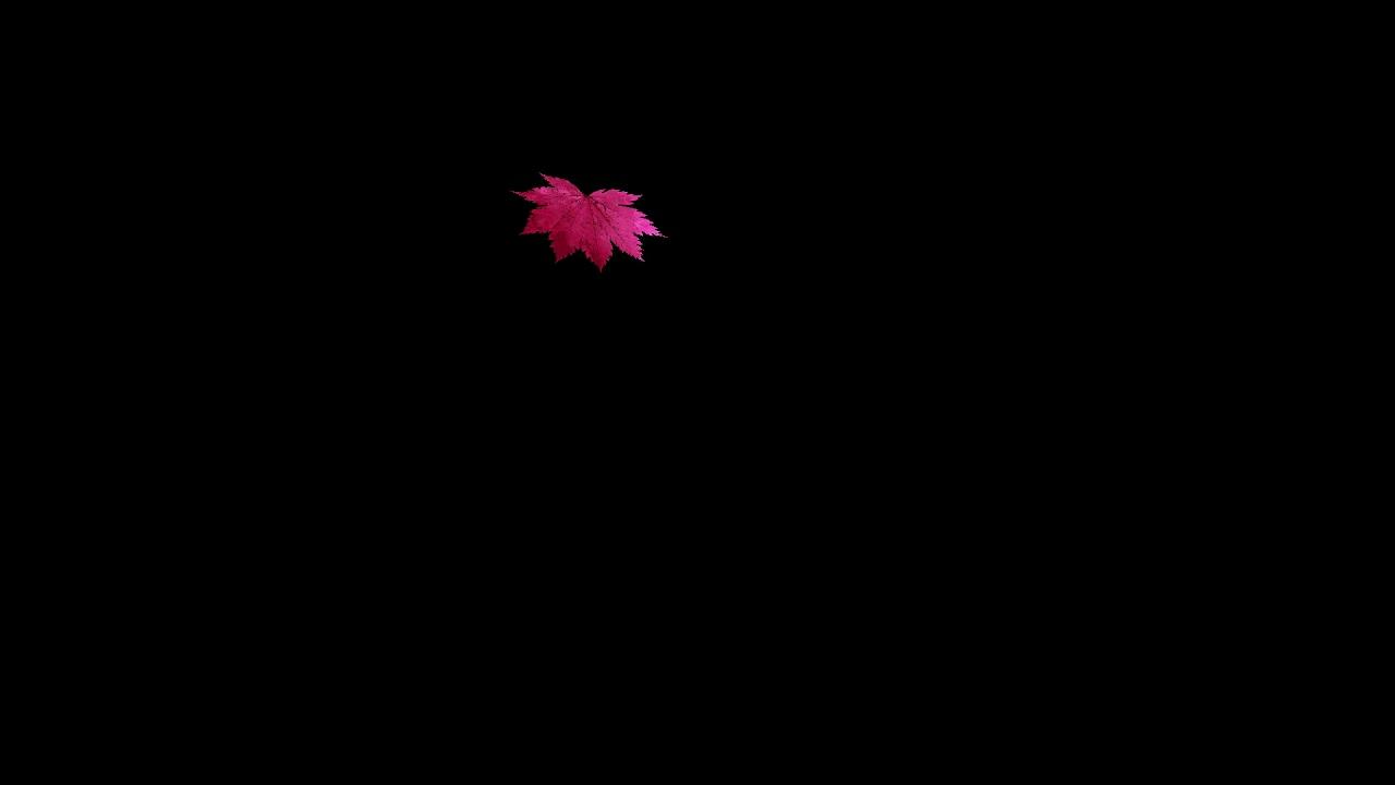 drops_leaf_16 落葉