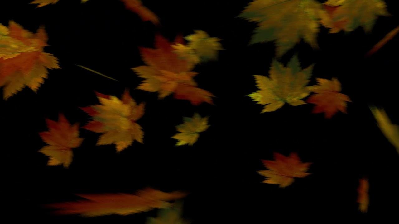drops_leaf_18 落葉